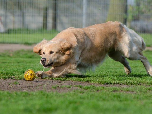 Large Outdoor Dog Kennels for Large Breeds